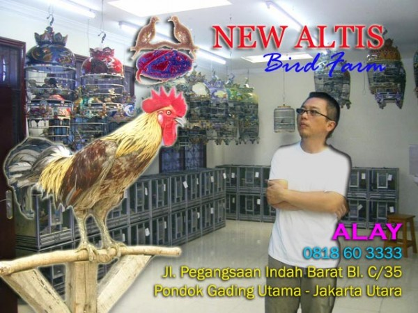 NewAltis BF Birdfarm Perkutut profile