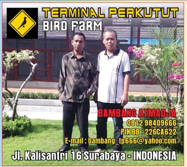 terminal perkutut birdfarm profile