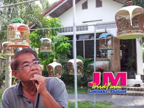 JM bird farm perkutut bangkok