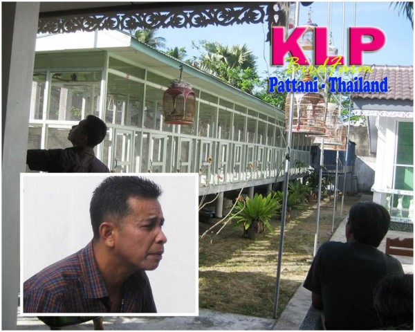 KLP bird farm perkutut pattani