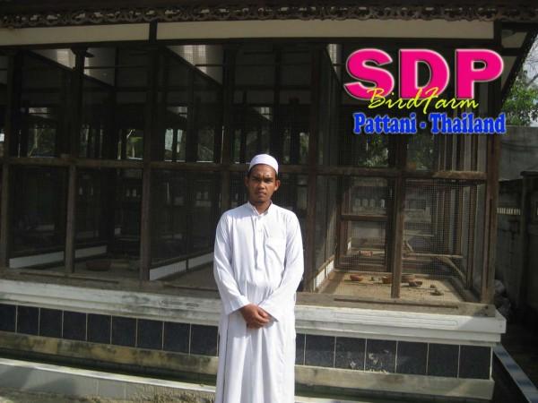 SDP birdfarm perkutut