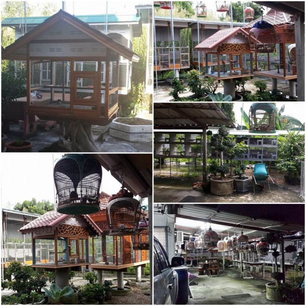 BY bird farm Pattani
